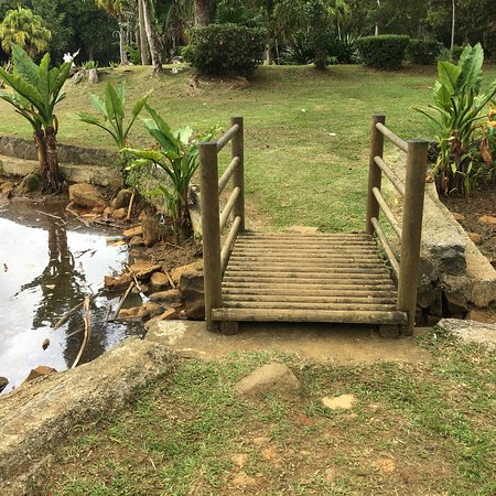 Curepipe Botanical Garden: photo8.jpg