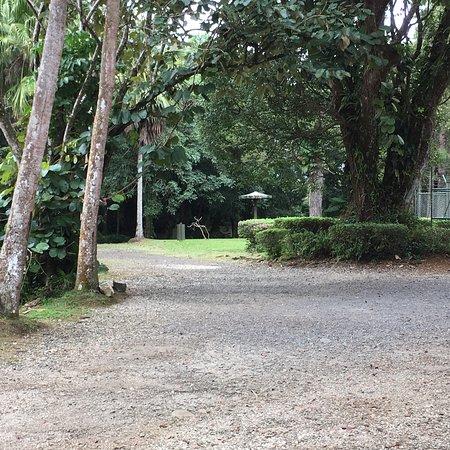 Curepipe Botanical Garden: photo9.jpg