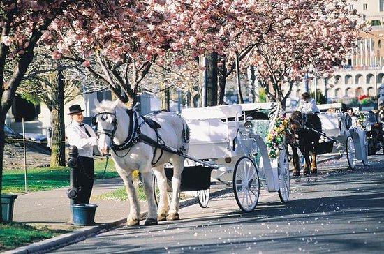 Excursão de carruagem em Beacon Hill...
