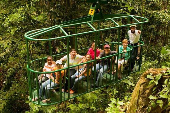 Tour en el Teleférico de Rainforest...