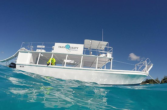 Barbados Snorkel Adventure in...