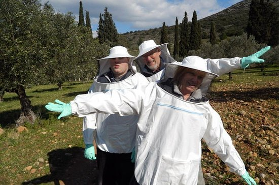 Become a Beekeeper for a Day in ...
