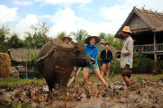 13 días de Tailandia y Laos Adventure...