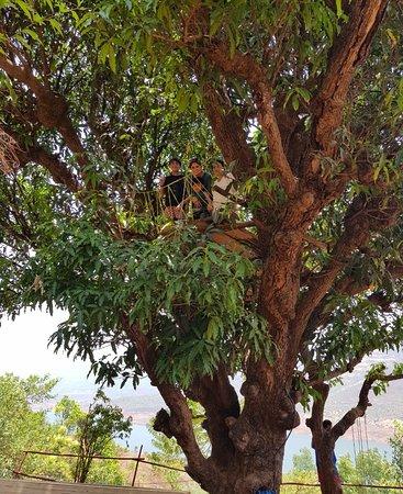 Wai, الهند: The Machaan Tree House