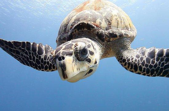 Excursión de buceo en Grand Cayman...