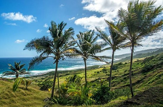Barbados Half-Day Island Tour