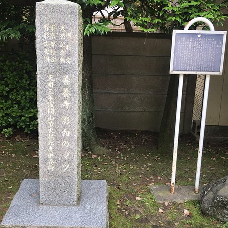 Yogonomatsu