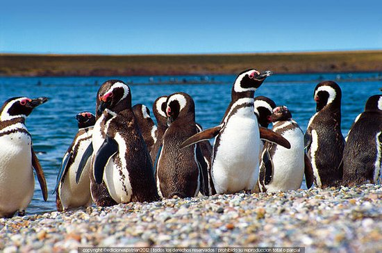 Punta Tombo Penguin Colony and Union...
