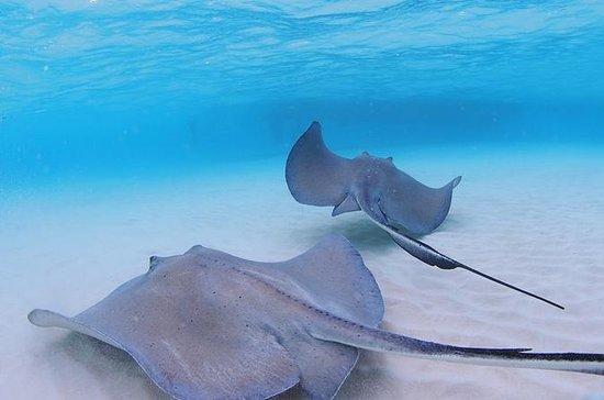 Grand Cayman Stingray City, Coral Garden and Turtle Farm Tour