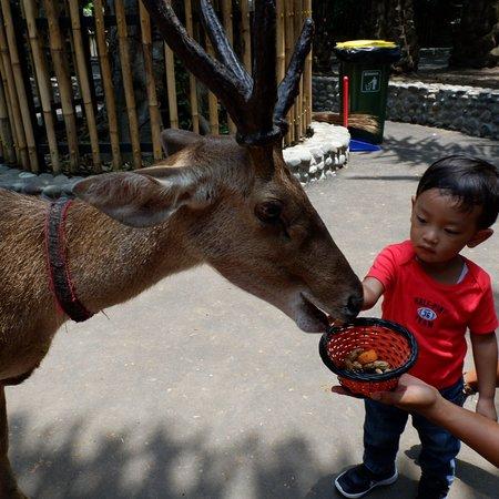 Bali Zoo Φωτογραφία