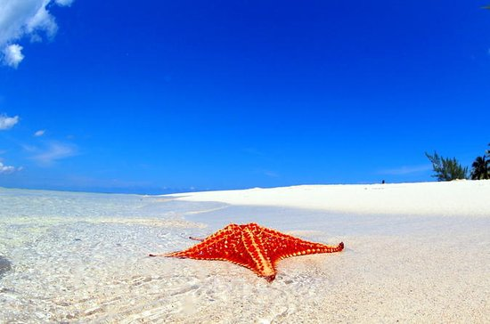 Starfish och Stingray City Adventure ...