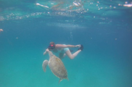Barbados Private Turtle Swim Tour