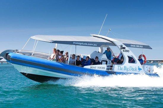 Excursão de barco pelo Seal Island...