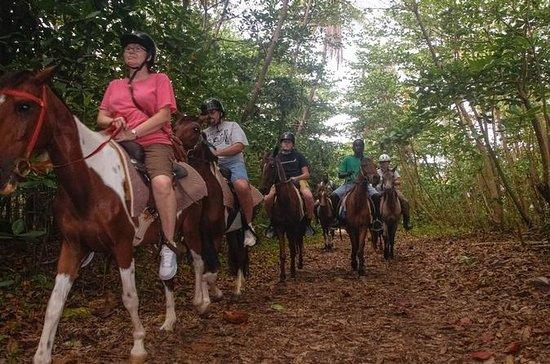 St Lucia Nature Reserve Horseback