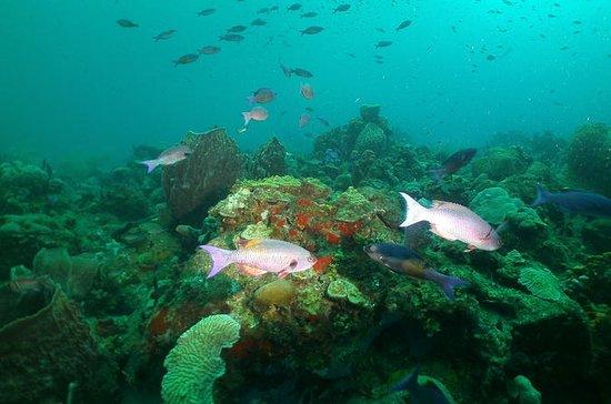 St Lucia Beginner Scuba Diving Tour
