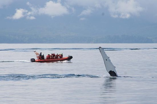 Zodiac Whale Watching Marine Wildlife