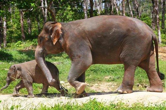 ATV Bike Tour with Elephant Trekking Premium Trip