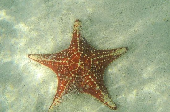 Starfish Beach- Stingray City e...