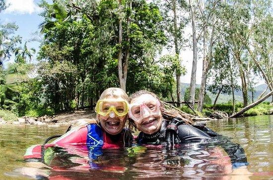 Rainforest Platypus Dive