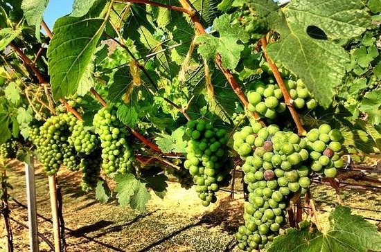 Khao Yai Winery - Vineyard Tours...