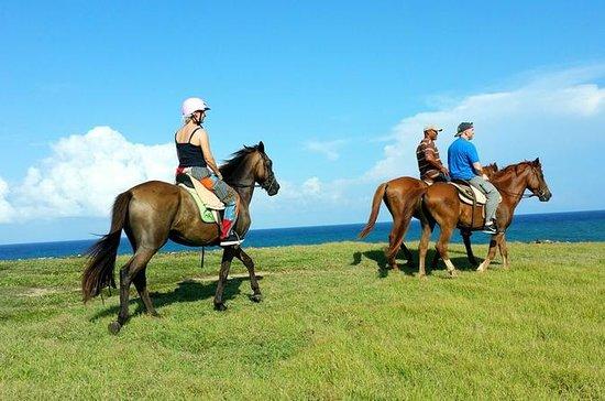 Horseback Riding at Atlantic Shores...