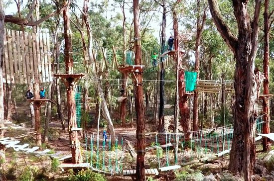 Trees Adventure Yeodene: Tree Ropes & Zipline Experience