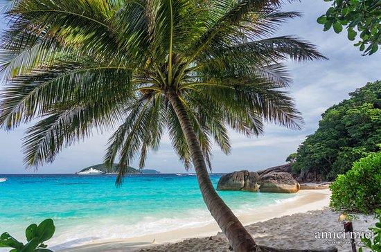 Snorkling Full Day Trip på Similan...