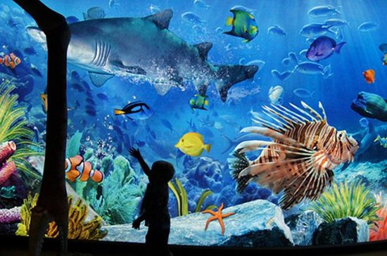 Sea Life Ocean World - Entrada...