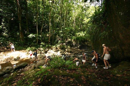 Rainforest Hike Aventure