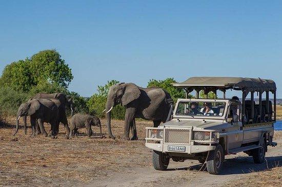 3 jours de safari aux chutes Victoria...