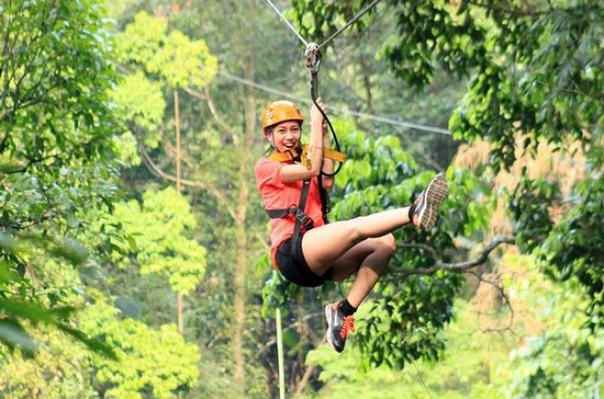 Flight of the Gibbon  Zipline...