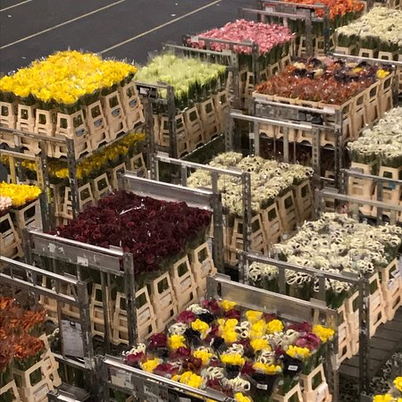 Royal FloraHolland: photo0.jpg