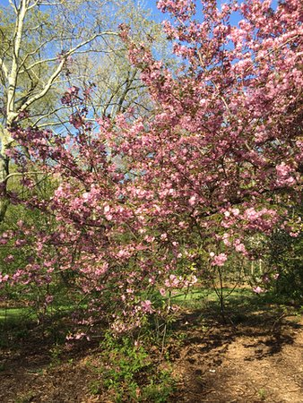 Central Park Φωτογραφία