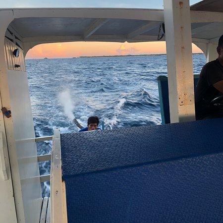 Thresher Shark Divers : photo1.jpg