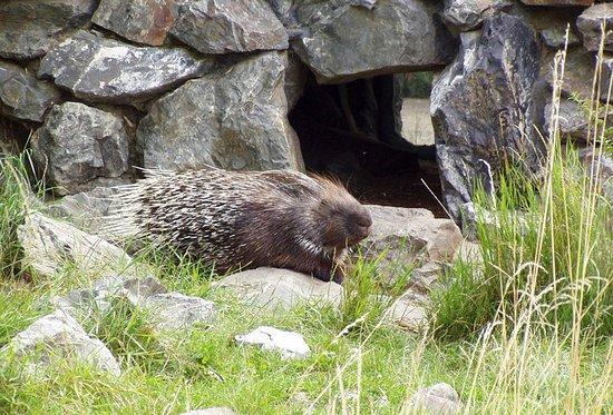 Golestan National Park: hedgehog