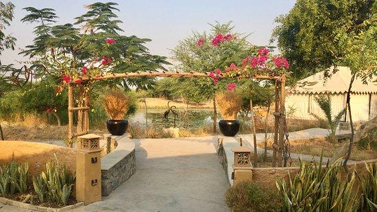 Bilde fra Velavadar