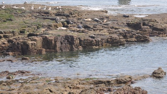 St. Mary's Lighthouse and Visitor Centre: Seals relaxing on the rocks