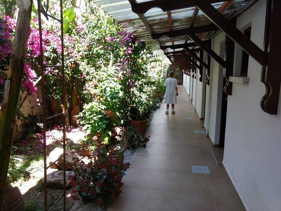 "Agios Georgios, Cyprus: The ""jungle"" feel to the lower corridor......we enjoyed walking down here."