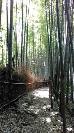 Niiharu Shimin Forest