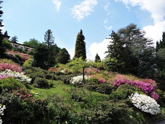 Carona, สวิตเซอร์แลนด์: Nel mezzo del parco
