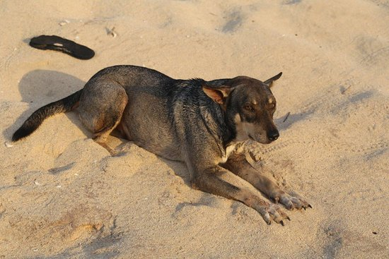 Anakao, มาดากัสการ์: Senor, the resident beach dog