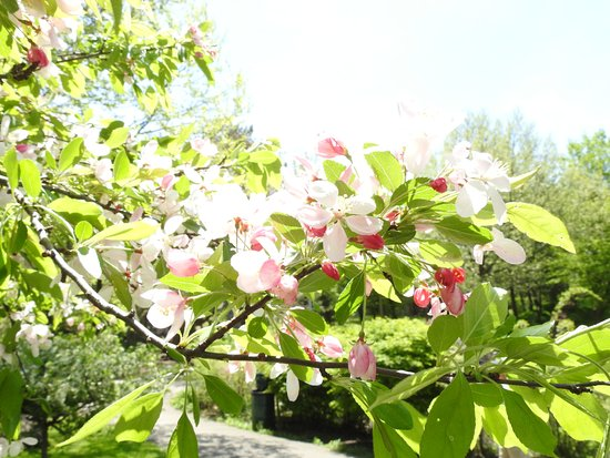 Glen Falls: flowering tree