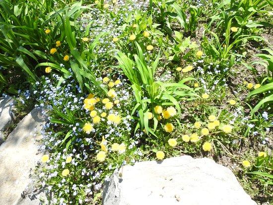 Glen Falls: flowers