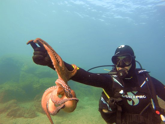Agia Marina, Greece: Octo buddy!!