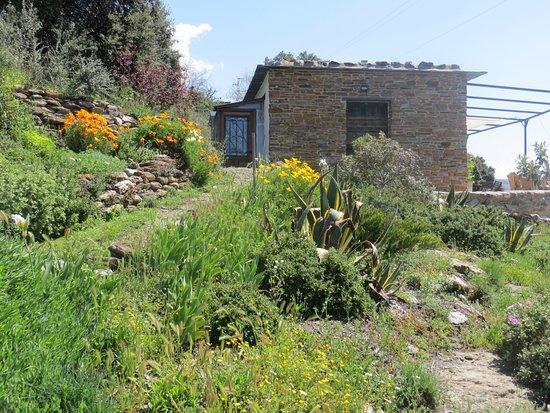 Portugos, إسبانيا: Wild flower bank