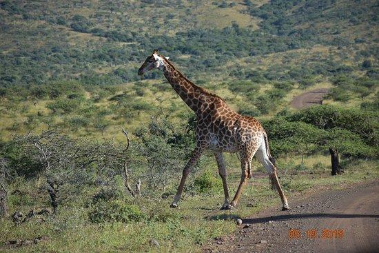 iSimangaliso Wetland Park صورة فوتوغرافية