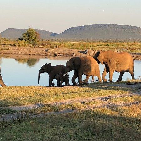 Madikwe Game Reserve, Sudáfrica: photo9.jpg