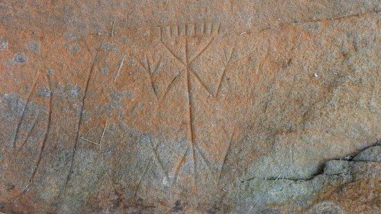 Centre d'Archéologie Amérindienne de Kourou: Roches gravées de la Carapa : détail