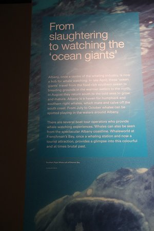 Western Australian Museum - Albany: Now the whales are safe