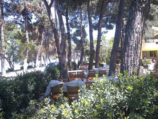 Camlik Motel & Restaurant: Restaurant Bahçesi